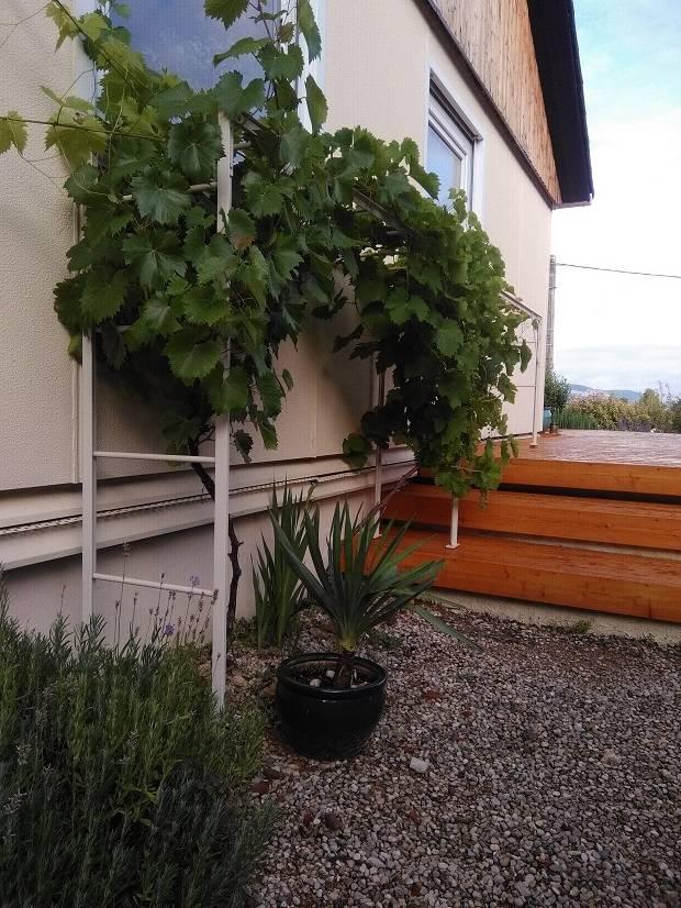 treille pour la vigne aix en provence 13 freestyle forge. Black Bedroom Furniture Sets. Home Design Ideas